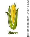 芯 蔬菜 玉米 14843222