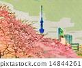 Cherry Blossoms and Sky Tree at Sarukawa Imperial Park 14844261