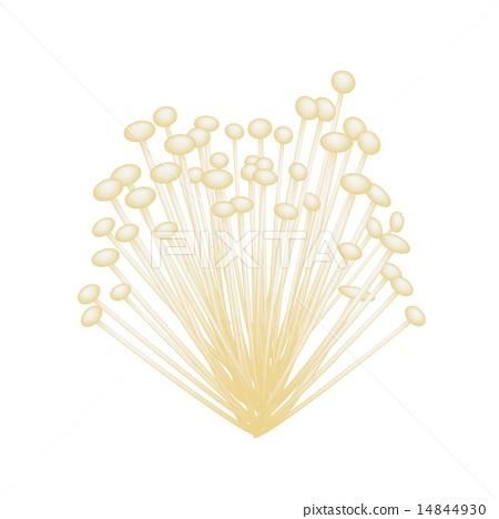A Group of Enoki Mushrooms on White Background 14844930