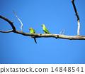 branch, parrots, green 14848541