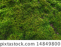 moss, green, background 14849800