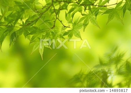 Fresh green 14893817