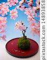 บอนไซ,ดอกไม้,ดอกซากุระบาน 14893858