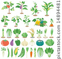 icon, vegetable, icons 14894481