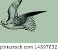 ขนนกนางนวลนกนางนวลขนนกบิน 14897832