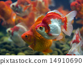 Goldfish Ryukin 14910690
