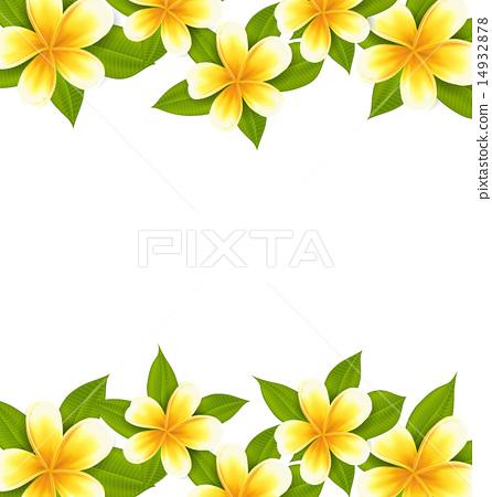 Decoration frame made in frangipani (plumeria) 14932878