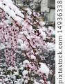snow, snowy, bloom 14936338