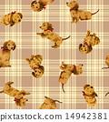 样式 动物 狗 14942381