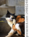 calico cat, scratch, cat 14960240