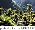 Beautiful palm trees 14971137