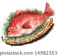 鲷鱼 鲷 海鲜 14982353