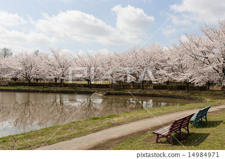 봄 모양 14984971