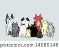 宠物 动物 小猫 14989146