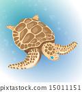 sea turtle 15011151