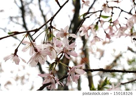 花朵 花卉 花 15018326