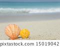 beach, shell, sand 15019042