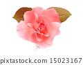 花朵 粉色 玫瑰花 15023167