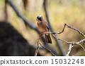 eurasian, jay, bird 15032248