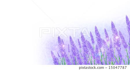 Lavender herb background 15047787
