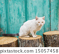 Wounded cat over trunk and green wooden door 15057458
