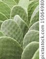 仙人掌 仙人掌属植物 仙人掌属 15064980