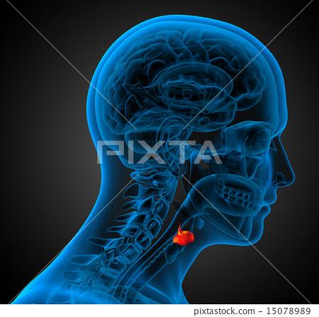 3d render medical illustration of the  larynx 15078989