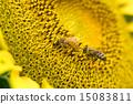 蜜蜂 巨大 宏观 15083811