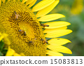 蜜蜂 巨大 宏观 15083813