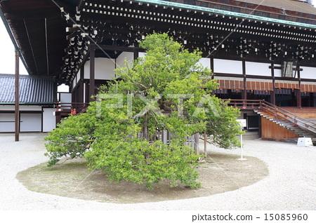Kyoto Imperial Palace Shiogama and Kanon Tachibana 15085960