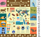 Domestic pets infographic elements, helthcare, vet 15097353