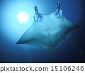 黄貂鱼 蝠鲼 光线 15106246