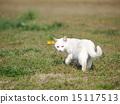 回看 猫 猫咪 15117513