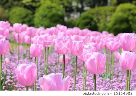 spring scenery flower garden flower field stock photo 15154908