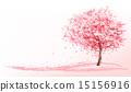 开花 樱花 美丽 15156916
