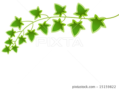 Simple and cute real Ivy (vine plant) illustration material 15159822