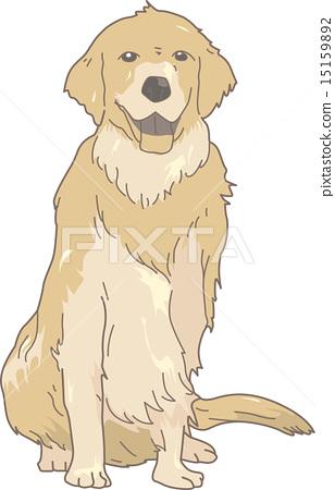 Dog Golden Retriever (Real) 15159892