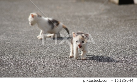 Stock Photo: pussy, kitty, two (animals)