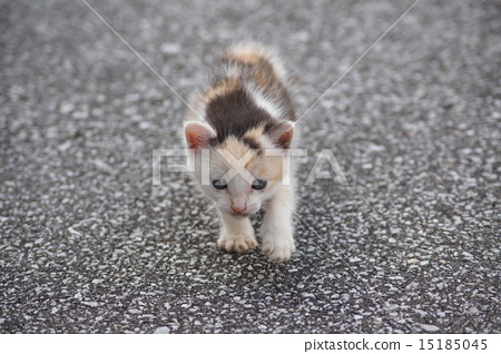 Stock Photo: kitty, pussy, one animal
