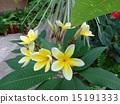 บลูมและบ้านดอกไม้นี้·ลีลาวดี 15191333
