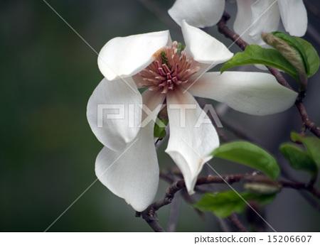코브의 꽃 15206607