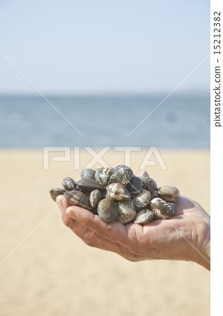 Harvesting shellfish 15212382