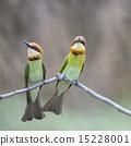 Chestnut-headed Bee-eater 15228001