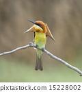 Chestnut-headed Bee-eater 15228002