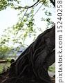 根 烟蒂 树 15240258