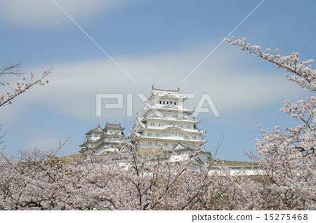 Japan _ World heritage _ Himeji Castle and cherry blossoms 15275468