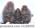 猴 猴生肖 幼兒 15286995