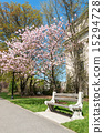 Japanese Cherry Blossoms in New York City 15294728
