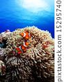 小丑鱼 热带鱼 银莲花 15295740
