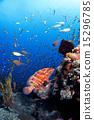 热带鱼 珊瑚礁 水下摄影 15296785